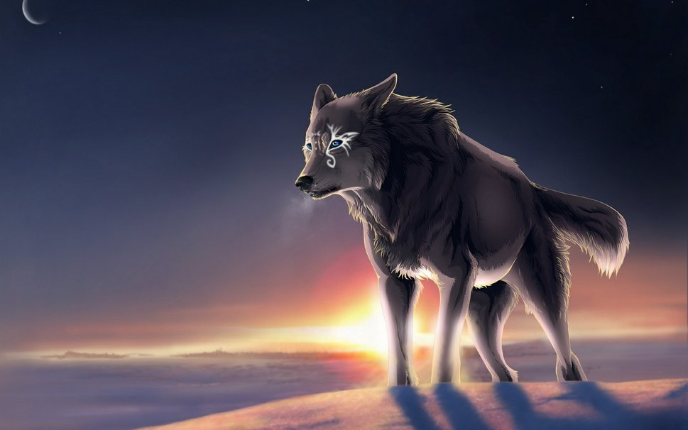 Wolves Are Like Me Misunderstood Beautiful And Wild Never To Be Tamed The Epitome Of Freedom All We Want Is Accepted Loved For Who